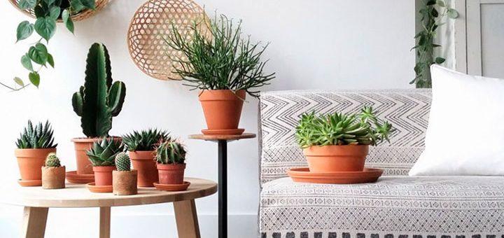 Los cactus plantas purificadoras del aire interior ecomundo - Cactus de interior ...