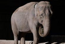 La justicia inspeccionó el Ecoparque porteño por supuesto maltrato animal