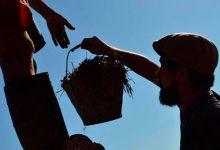 Ecomuna: el nuevo barrio de Mar del Plata sostenido en el marco de la permacultura