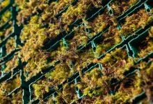 Un árbol artificial que absorbe la misma contaminación que un bosque