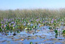 Los 13 datos más destacados sobre el estado del medio ambiente en Argentina