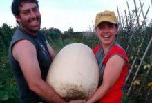 Produce verduras sin agrotóxicos y ganó el premio a la mujer empresaria del año