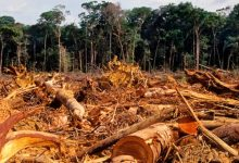 La deforestación en la Amazonia avanza sin posibilidad de recuperar la vegetación