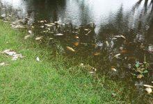 Peces muertos en el Paraná: ¿falta de oxígeno o contaminación?