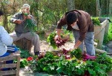 """Curso a distancia """"Agroecología urbana ¿cómo producir alimentos en las ciudades?"""""""