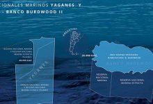 Sin Azul No Hay Verde | 8 de junio Día Mundial del Océano