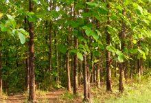Seguro Verde: herramienta para reforestar el país