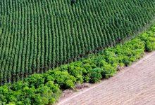 El boom de la soja devora una vasta zona ecológica tan vital para Brasil como el Amazonas