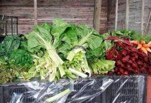 Verdura sin agrotóxicos en CABA