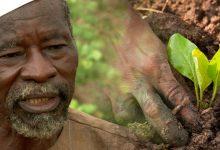 """Premiaron con un """"Nobel alternativo"""" a Yacouba Sawadogo, el """"hombre que detuvo el desierto"""""""