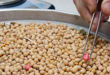 Ley de Semillas: el lobby de Monsanto llega a Diputados