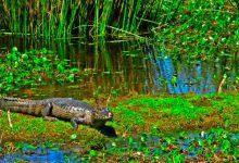El Parque Nacional Iberá es Ley
