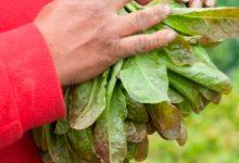 Más posibilidades para estudiar agroecología