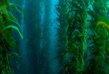 Crean un nuevo plástico biodegradable con algas marinas y sin petróleo