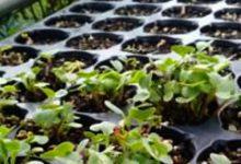 Más plantas por más suelo: fitorremediación para paliar la contaminación