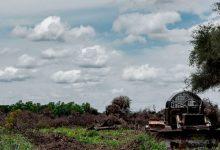 El gobierno de Chaco decretó suspender los desmontes en los bosques nativos