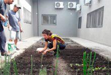 Huertas: Una onda verde en la gran ciudad
