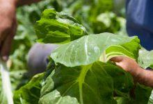 La gran mentira de las buenas prácticas agrícolas (BPA)